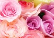 10月の誕生花『ミニバラ』の花言葉、毎年花を咲かせるコツの詳細へ