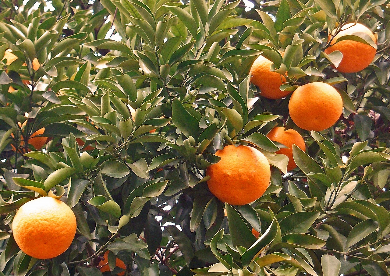 誕生花(オレンジ2)