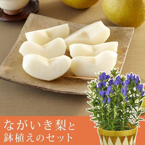 敬老の日 りんどう鉢植えセット「千葉県産 ながいき梨」