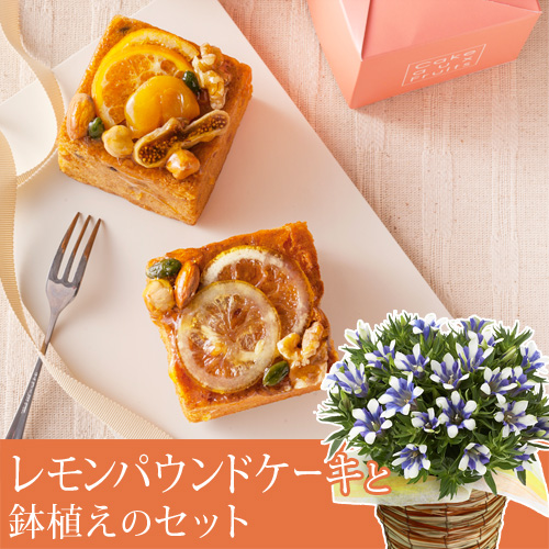 敬老の日 りんどう白寿鉢植えセット「広島産レモンのパウンドキューブ」