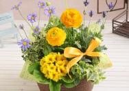 【イイハナ・ドットコム】4月の誕生花『ラナンキュラス』のフラワーギフトの詳細へ