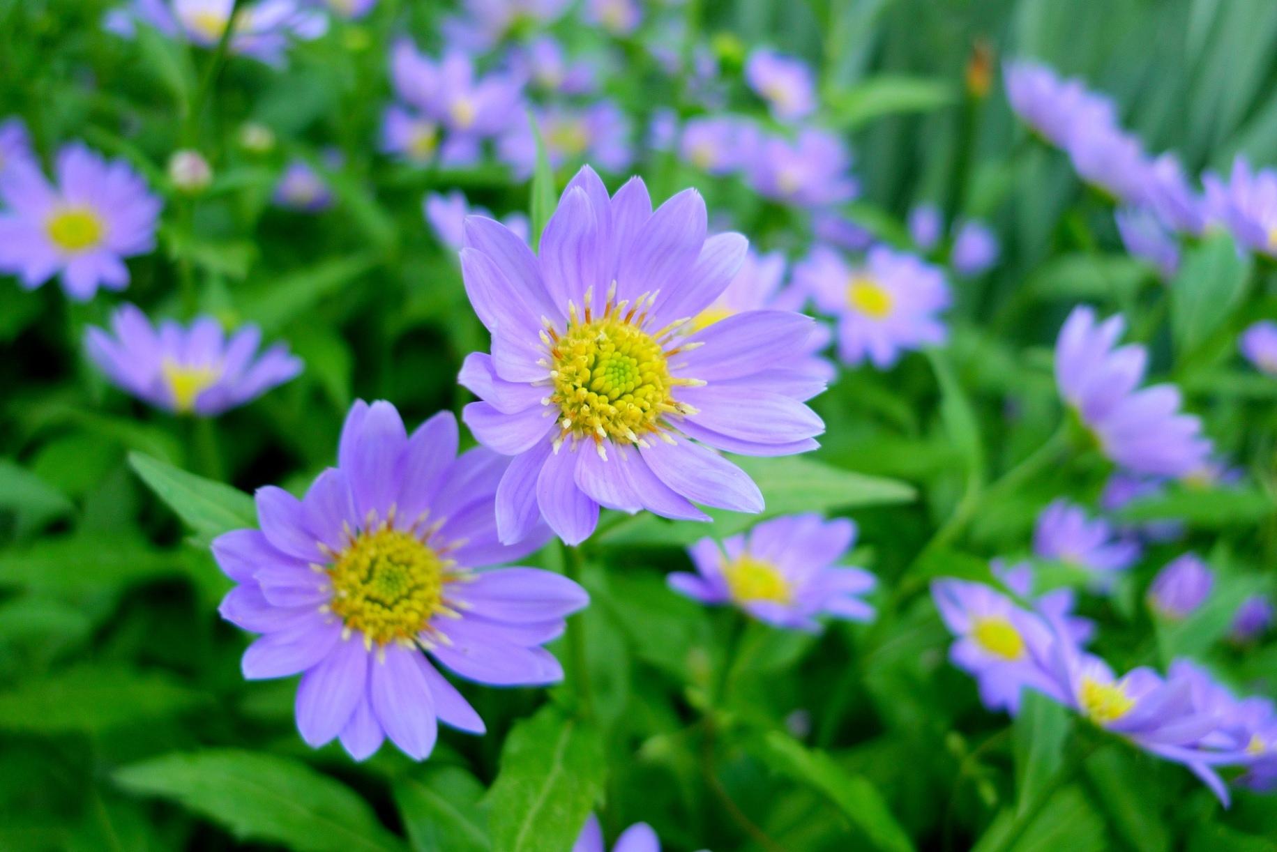 2 月 誕生 花 2月の誕生花一覧 誕生日の花と誕生月の花・花言葉