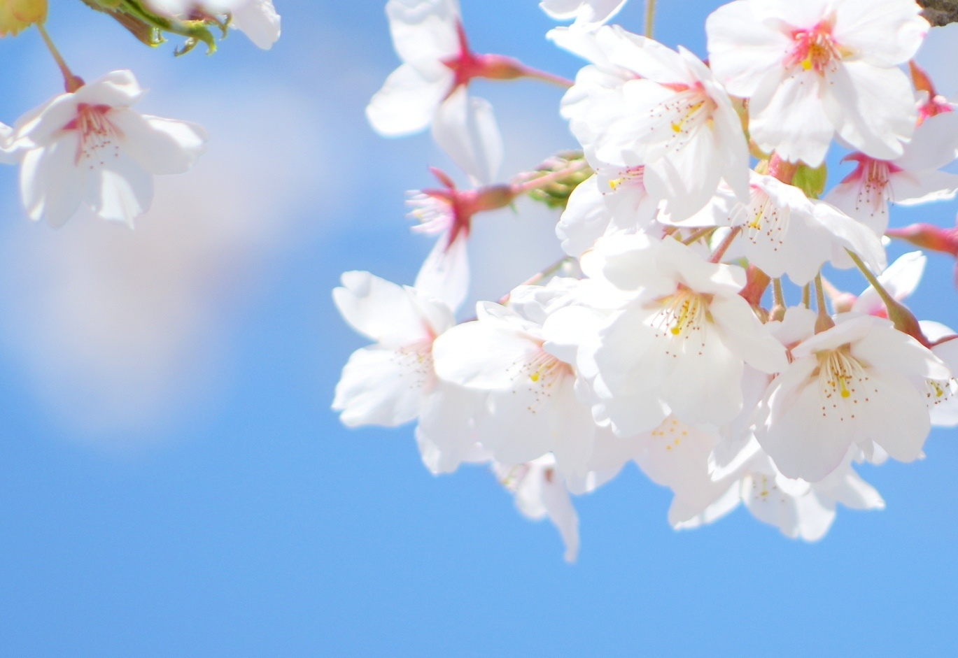 花言葉(4月1日_1)