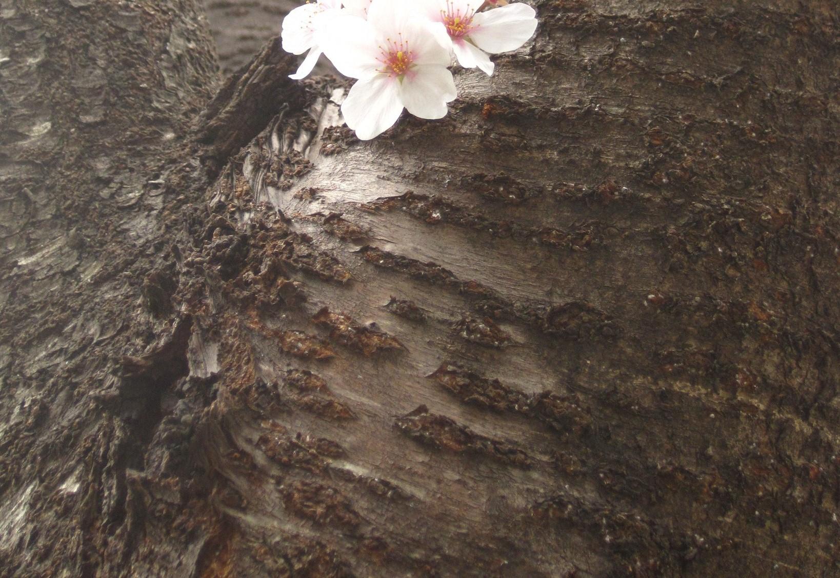 花言葉(4月1日_2)