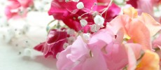 誕生花(4月8日_1)