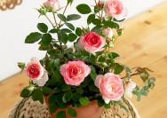 【イイハナ・ドットコム】10月の誕生花『ミニバラ』のフラワーギフトの詳細へ