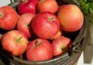 9月29日の誕生花『リンゴ(林檎)、ひめりんご』の花言葉の詳細へ