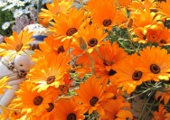 4月7日の誕生花『ディモルフォセカ』の花言葉、育て方の詳細へ