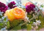 4月3日の誕生花『ラナンキュラス』の花言葉、育て方の詳細へ