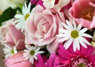 4月6日の誕生花『マーガレット』の花言葉、育て方の詳細へ