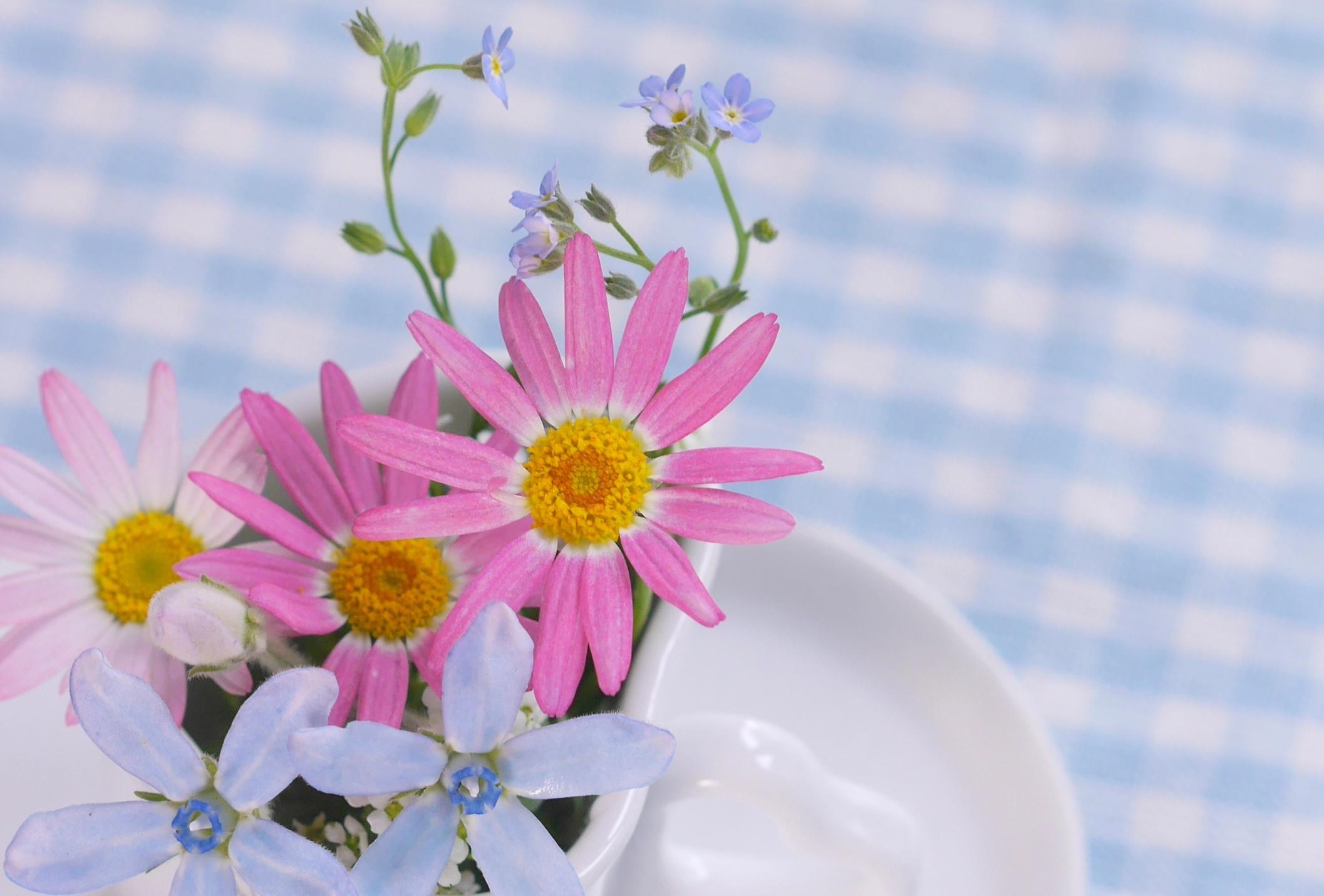誕生花(4月5日_2)