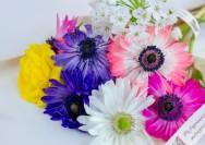 4月4日の誕生花『アネモネ』の花言葉、育て方の詳細へ
