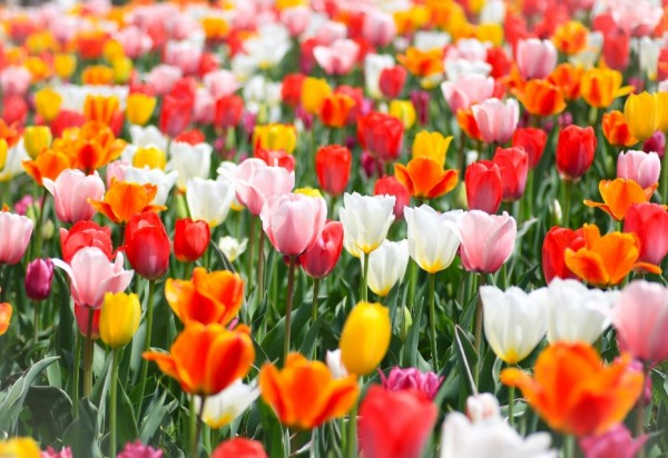 誕生花(4月10日_1)